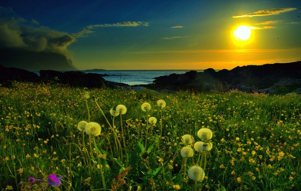 Picture sunset, lake, glade, Nature, dandelions