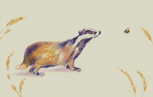 Picture watercolor, bee, face, badger