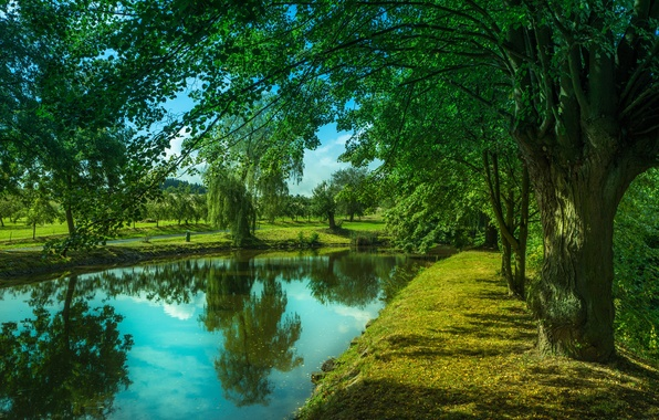 Picture greens, trees, landscape, nature, lake