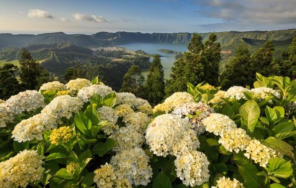 Picture flowers, mountains, Portugal, Portugal, hydrangeas, Azores, Ponta Delgada, Ponta Delgada, Azores, Mosteiros, Mosteiros, Lagoon of ...