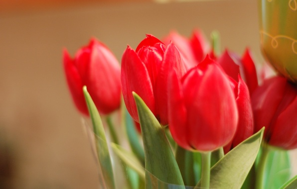 Picture leaves, macro, flowers, background, widescreen, Wallpaper, petals, Bud, tulips, red, wallpaper, red, rose, leaves, flowers, ...