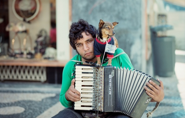 Picture music, dog, musician
