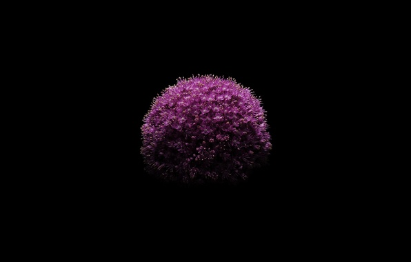 Wallpaper Apple, IPhone, Black, Flower, IOS 8 Images For
