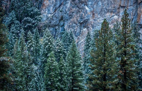 Picture winter, snow, trees, rocks, CA, USA, Yosemite, Yosemite National Park