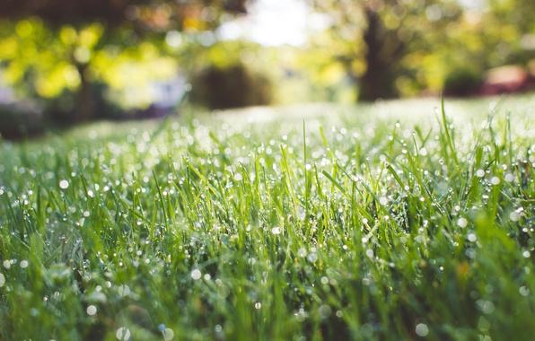 Picture green, grass, wet, field, nature, park, raining