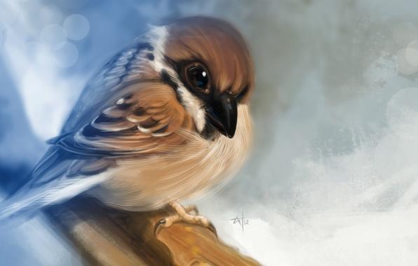 Picture macro, bird, branch, art, Sparrow