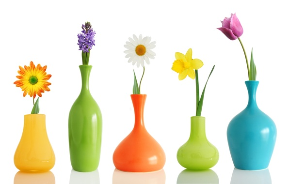 Picture flowers, Tulip, Daisy, Narcissus