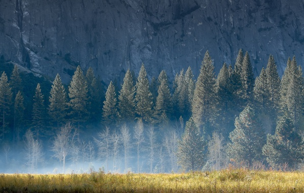Picture summer, grass, light, trees, nature, fog, rock, mountain, morning
