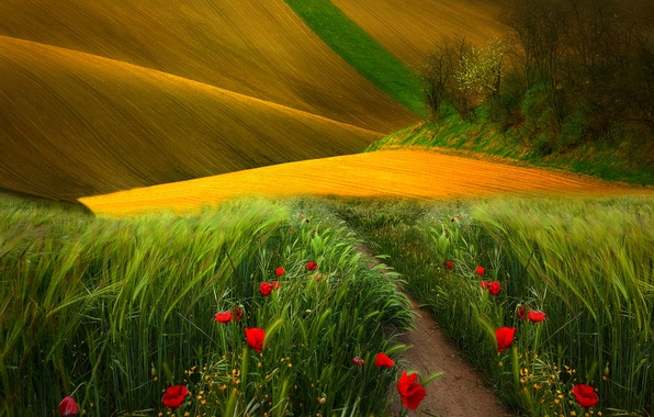 Picture field, grass, trees, landscape, flowers, nature, the way, view, Maki, colors, grass, trees, field, landscape, …