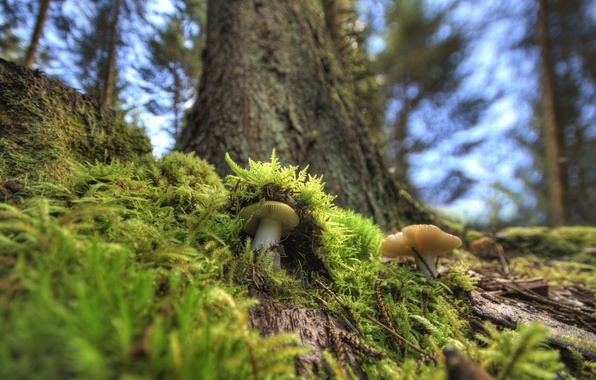 Picture forest, macro, mushrooms, moss