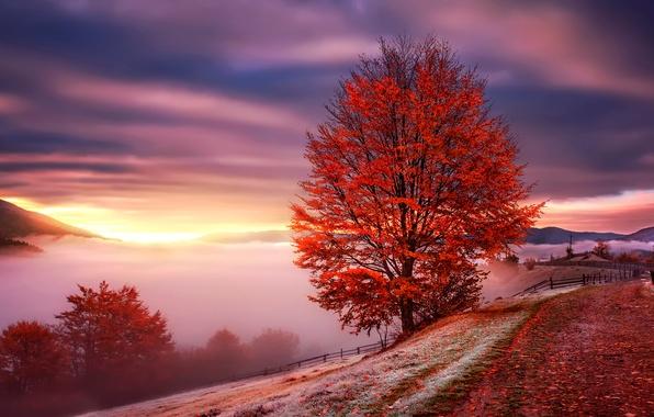 Picture autumn, mountains, fog, dawn, Ukraine, Carpathians