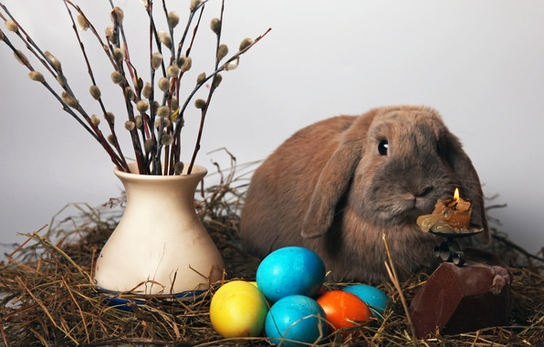 Picture egg, candle, rabbit, Easter, vase, Verba, easter