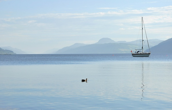 Picture the sky, mountains, lake, boat, yacht, duck