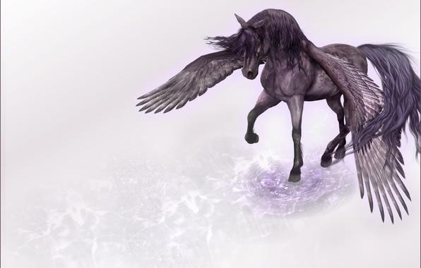 Picture rendering, wings, minimalism, Horse, Pegasus, tread