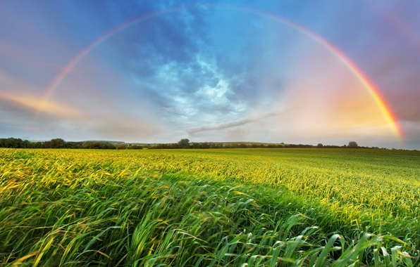 Picture summer, grass, landscape, rainbow, space