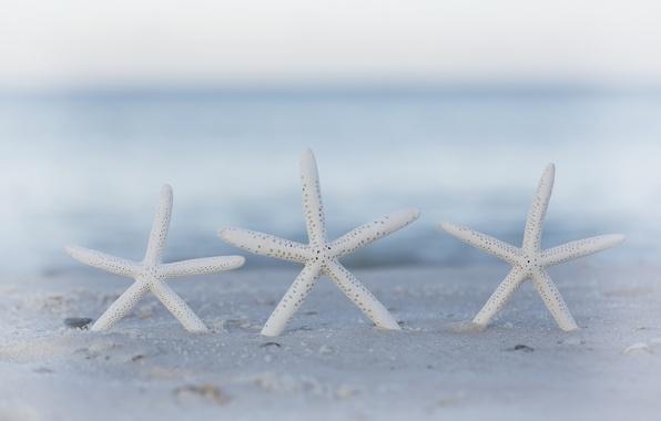 Picture sand, beach, bokeh, starfish