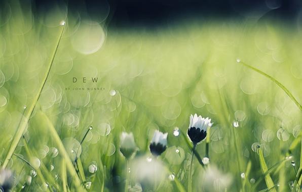 Picture grass, macro, flowers, Rosa, glare, morning, bokeh