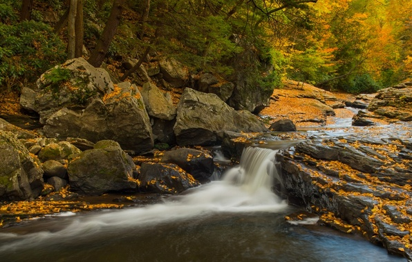 Picture autumn, forest, stones, waterfall, PA, cascade, Pennsylvania, State Park Ohiopyle, Ohiopyle State Park, Meadow Run …