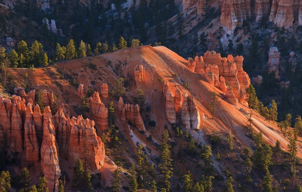 Picture trees, mountains, rocks, slope, Utah, USA, Bryce Canyon National Park