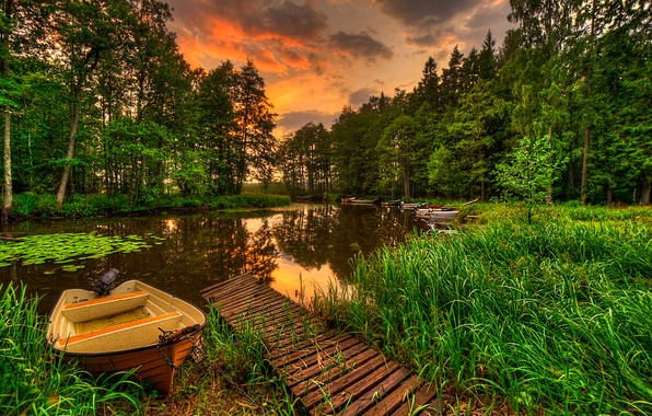 Picture forest, the sky, grass, water, landscape, sunset, nature, lake, reflection, view, grass, forest, sky, landscape, …