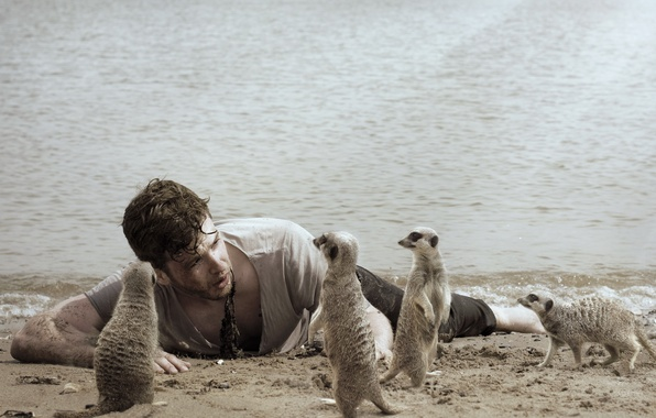 Picture the situation, meerkats, guy