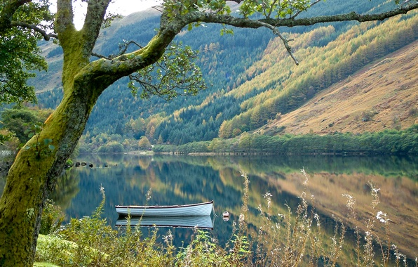 Picture forest, grass, mountains, nature, lake, tree, boat