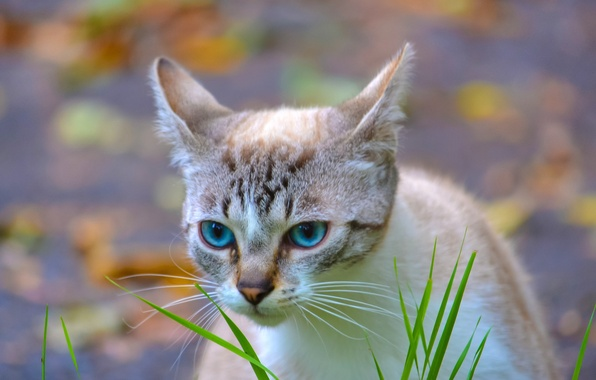Picture cat, grass, eyes, background, blue, grass, striped
