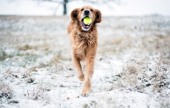 Picture snow, the game, dog