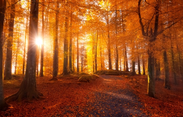Picture road, autumn, forest, leaves, the sun, light, trees