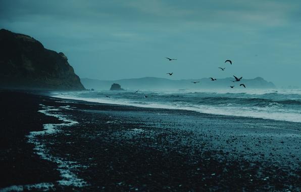 Picture sea, wave, beach, rocks, seagulls