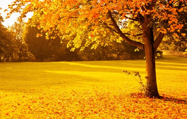 Picture autumn, trees, Park, foliage, Nature