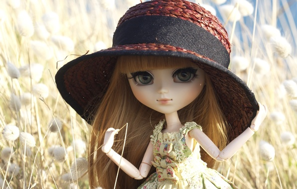 Picture toy, hat, doll, hat