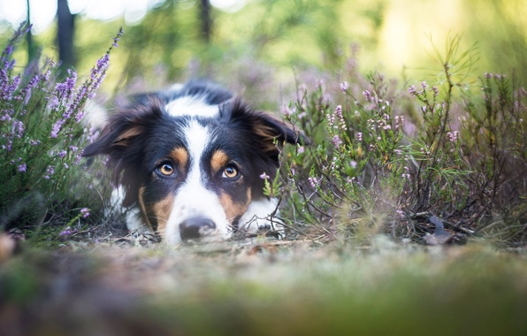 Picture look, nature, each, dog
