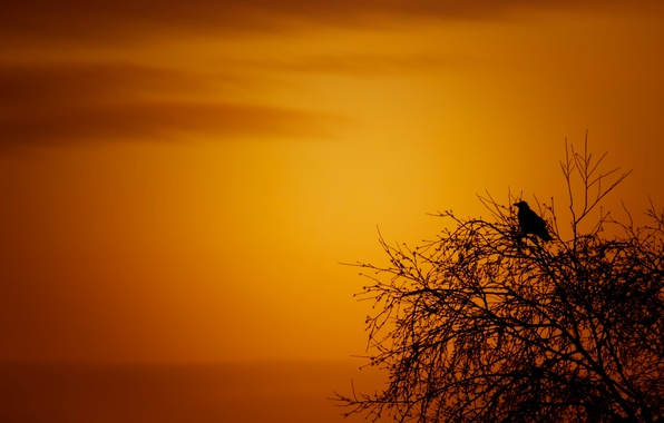 Picture sea, the sky, clouds, sunset, tree, bird, silhouette
