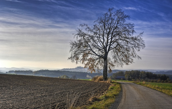 Picture road, field, tree, morning