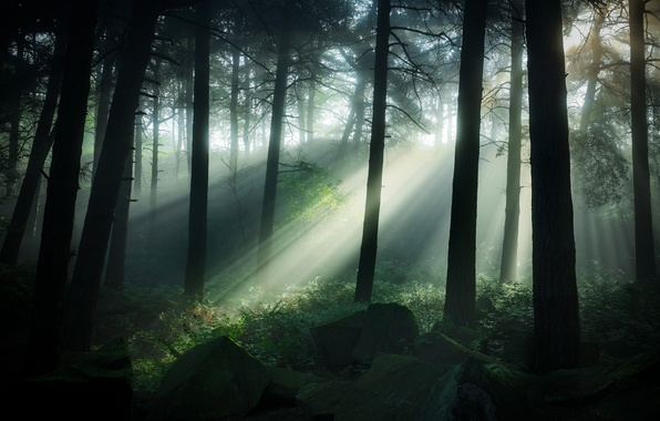 Wallpaper Forest Grass Trees Stones Uk Twilight The