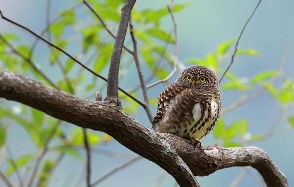Picture the sky, eyes, owl, bird, branch, beak