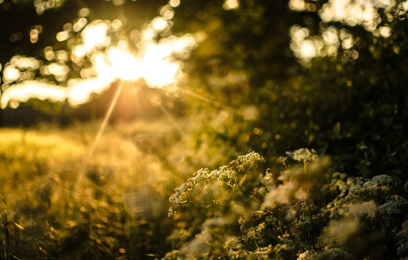 Picture greens, grass, the sun, light, trees, sunset, nature, plants, the evening, blur, the bushes, bokeh