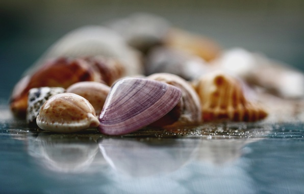 Picture glass, macro, surface, photo, background, Wallpaper, blur, shell, wallpapers