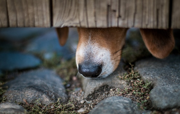 Picture macro, dog, nose