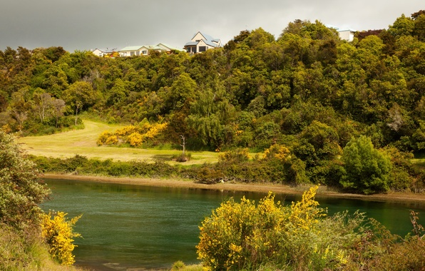 Picture greens, trees, river, shore, home, New Zealand, the bushes, hill, Waikato