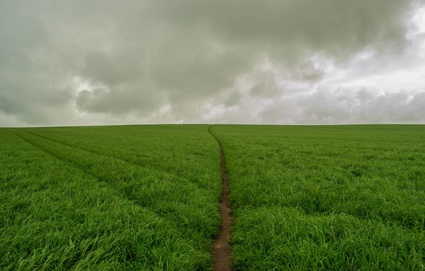 Picture field, clouds, green, green, storm, storm, field, clouds, track, track