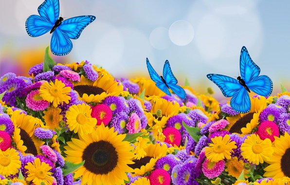 Picture butterfly, sunflowers, spring, colorful, butterfly, beautiful, bokeh, asters