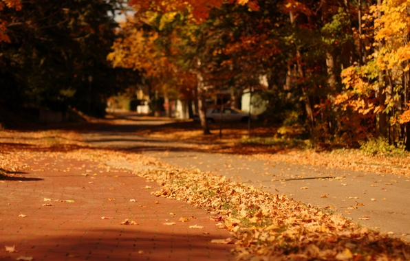 Picture autumn, leaves, macro, trees, nature, the city, background, tree, widescreen, Wallpaper, street, blur, yellow, track, …