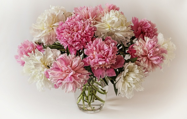 Picture background, bouquet, peonies