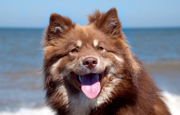 Picture background, portrait, dog