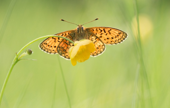 Picture flower, yellow, background, butterfly