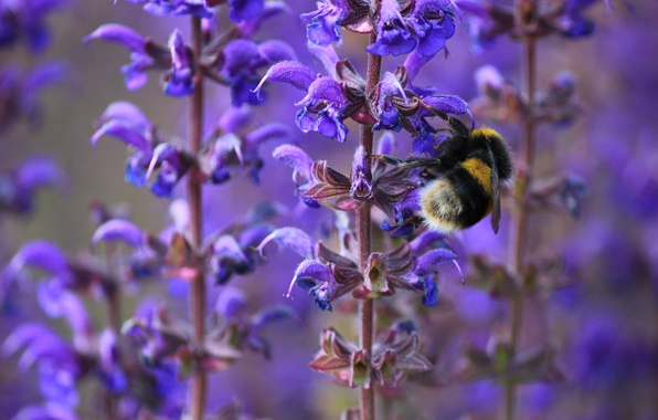 Picture macro, flowers, bee, spring, insect, bumblebee, lilac