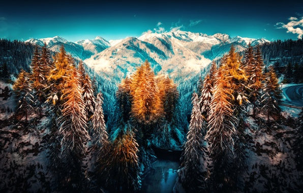 Picture snow, trees, mountains, treatment, Winterland
