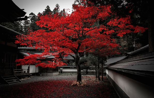 Picture autumn, leaves, house, tree, Japan, yard, the crimson